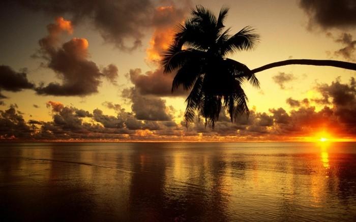 medal-of-honor-soleil-levant-nature-image-soleil-palmes