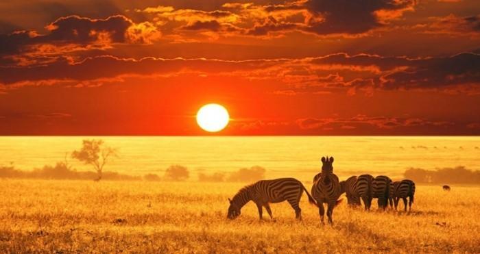 medal-of-honor-soleil-levant-nature-image-soleil-zebras