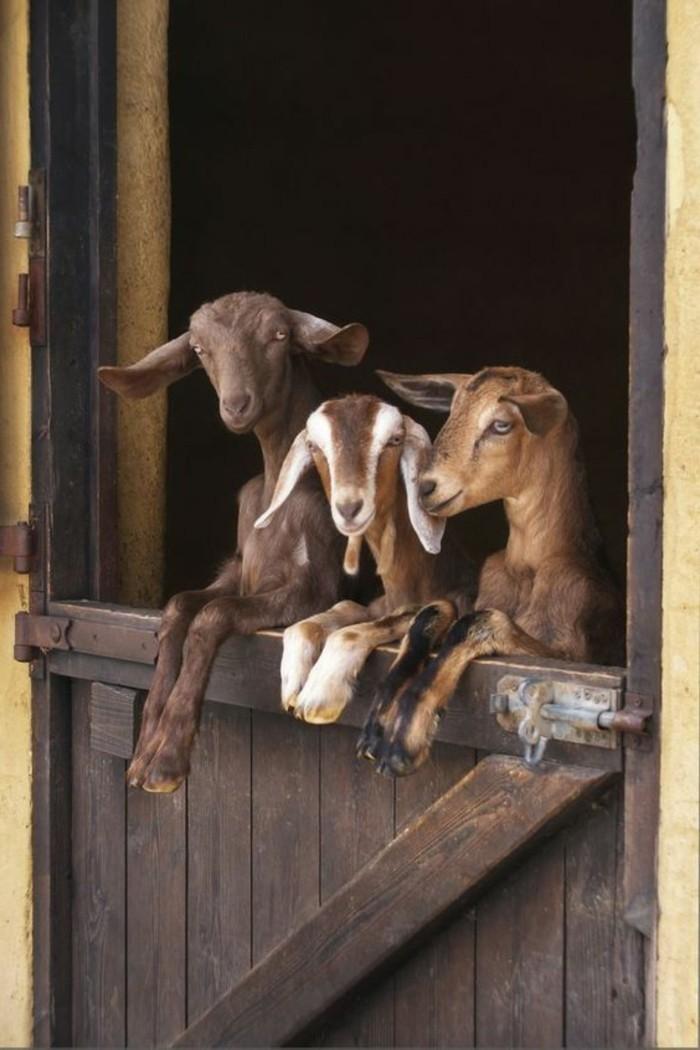 photographie-les-animaux-les-plus-mignons-du-monde-image