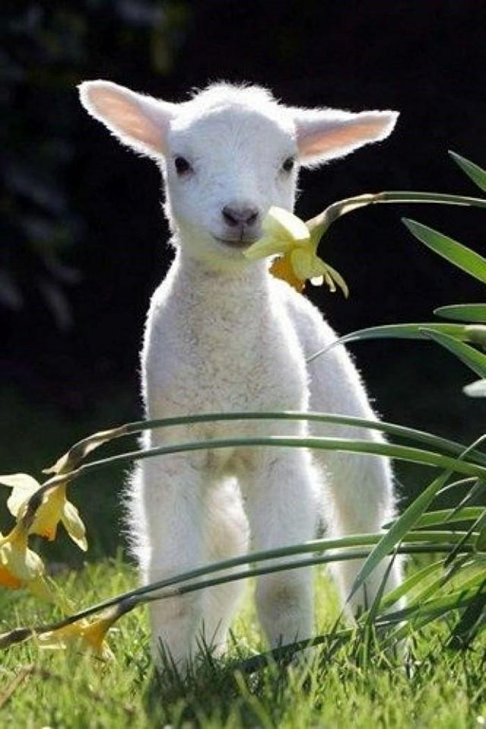 photographie-les-animaux-les-plus-mignons-du-monde