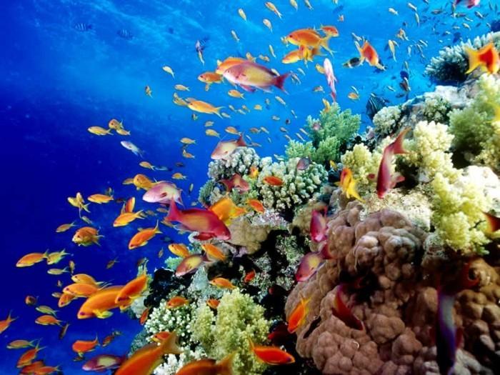 Great-Barrier-Reef-poissons-liste-de-chose-à-faire-avant-de-mourir