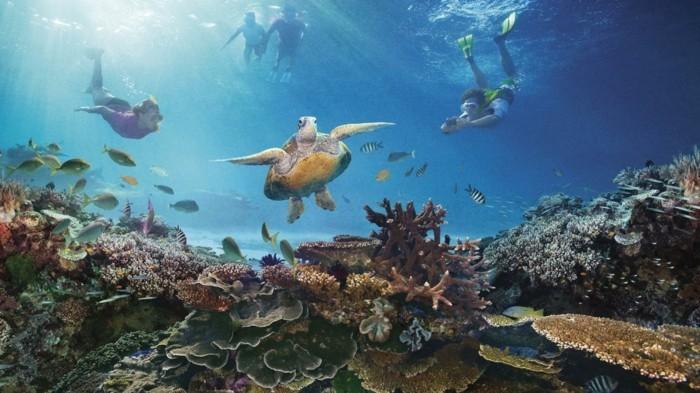 Great-Barrier-Reef-poissons-se-plonger-liste-de-chose-à-faire-avant-de-mourir