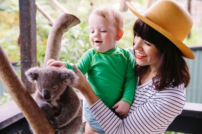 adorable-photo-animal-koala-image-de-bébé-mignon-enfant-joli