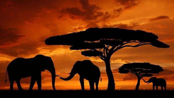 africa-france-loisir-vacances-voyages-internationaux