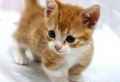 Les animaux miniatures – une collection d'animaux improbables