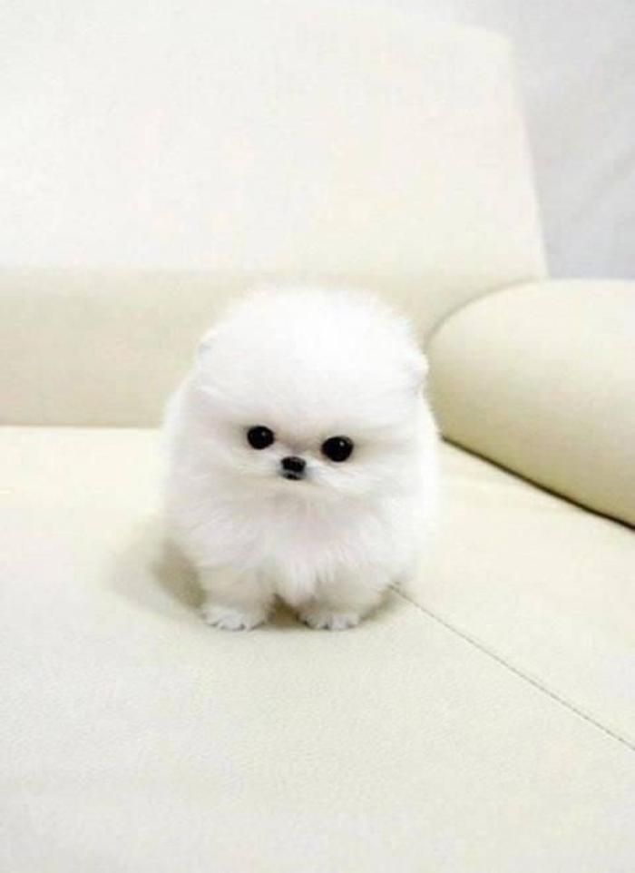 animaux-miniatures-les-plus-mignons-des-animaux