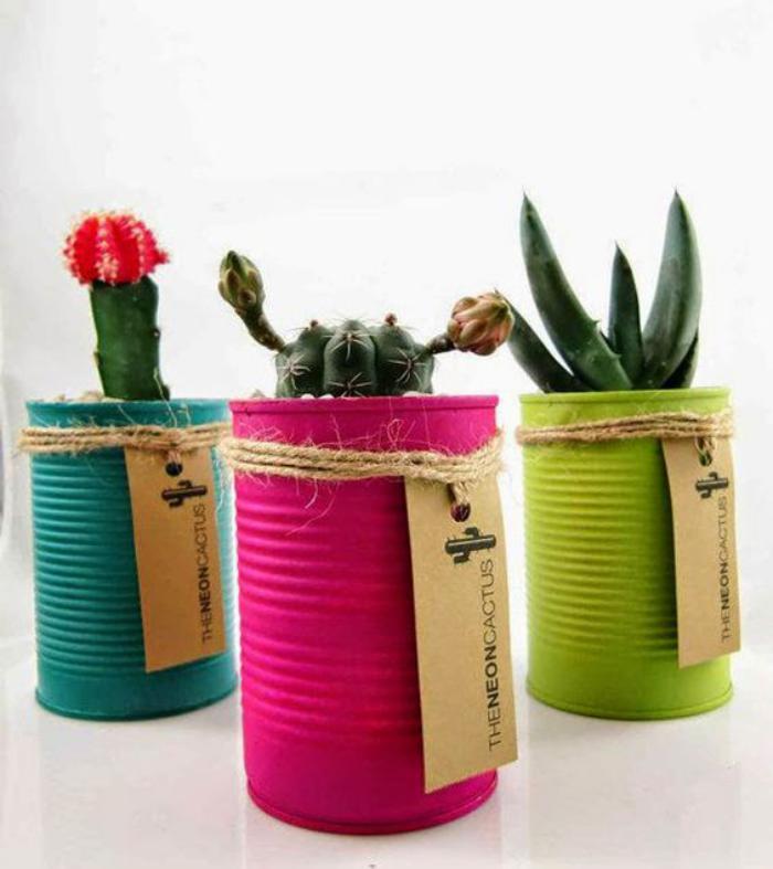 boîte-de-conserve-planter-des-cactus-en-boîtes-de-conserve