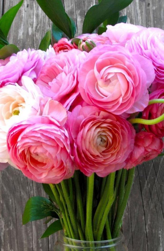 bouquet-de-pivoines-fleuries-roses-brassée-de-pivoines
