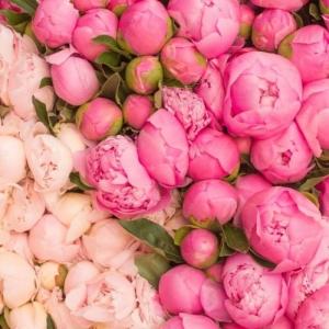 Le bouquet de pivoines en 48 photos magnifiques