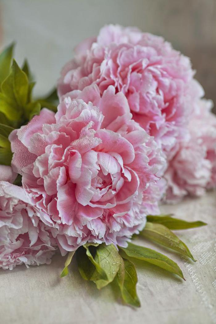 bouquet-de-pivoines-pivoines-fleuries-bouquet-pivoine-rose