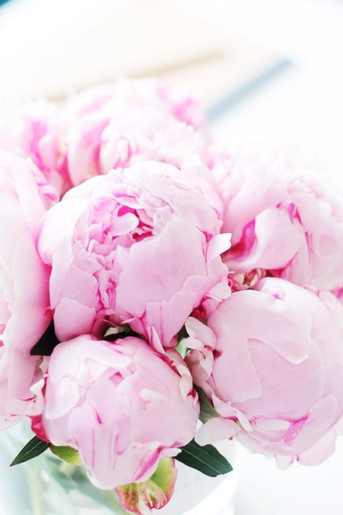 bouquet-de-pivoines-roses-pâles-le-meilleur-bouquet-de-printemps