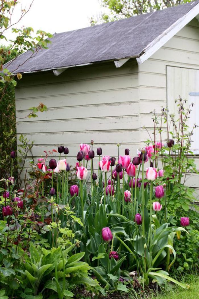 cabanon-de-jardin-jardin-de-tulipes-fleuries