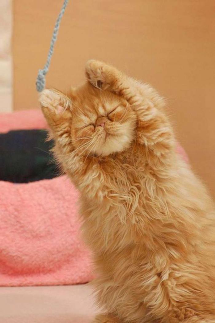 doux poilu adolescent chatte