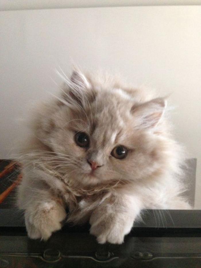 chat persian