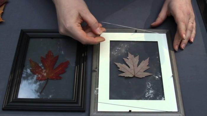 feuilles-d-arbre-photo-feuille-d-arbre-cool-idée-diy-avec-feuilles-herbier-décorat