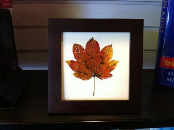 feuilles-d-arbre-photo-feuille-d-arbre-idée-cadre-photo-noire
