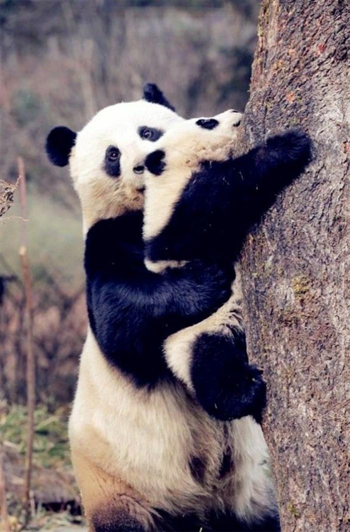 image-mignonne-de-panda-en-france-beauté