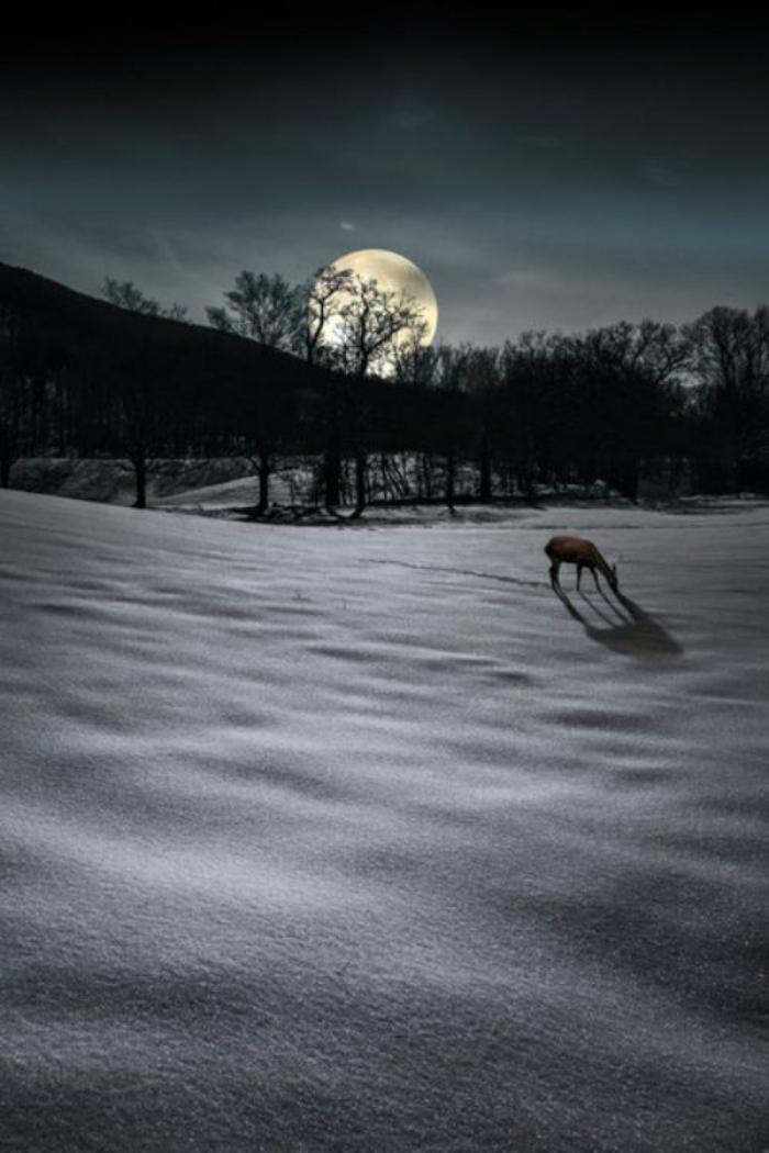 la-pleine-lune-au-dessus-d'une-foret-paysage-énigmatique