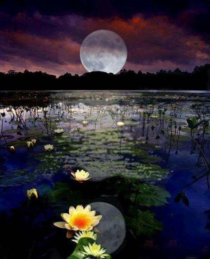 la-pleine-lune-et-lac-avec-nénuphars