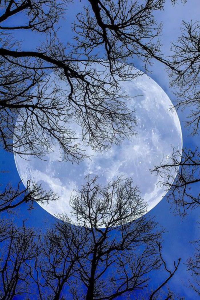 la-pleine-lune-la-grande-lune-et-branches-des-arbres