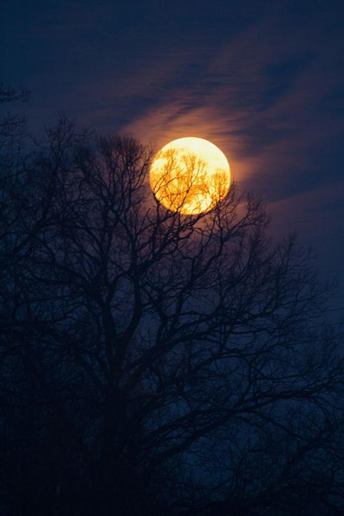 la-pleine-lune-paysage-mystérieux-la-lune-et-les-silhouettes-des-arbres