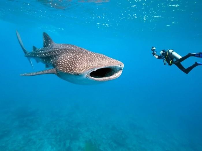 liste-de-choses-à-faire-avant-de-mourir-nager-avec-des-requins-dans-les-Maldives