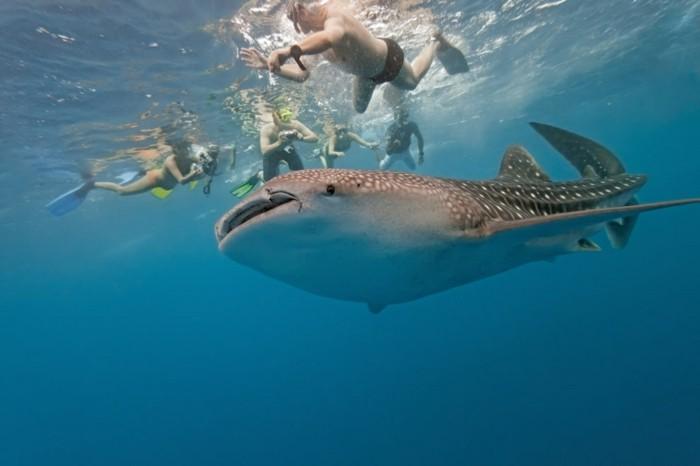 liste-de-choses-à-faire-avant-de-mourir-nager-dans-l-ocean-avec-les-animaux
