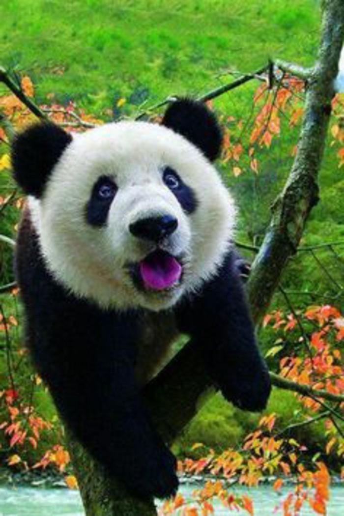 nom-du-bébé-panda-image-jolie-d-animal-vert