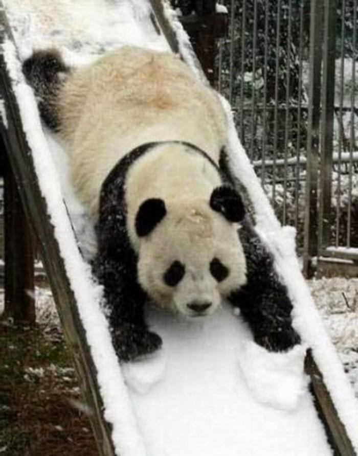 le b b panda pouvez vous choisir le plus mignon. Black Bedroom Furniture Sets. Home Design Ideas