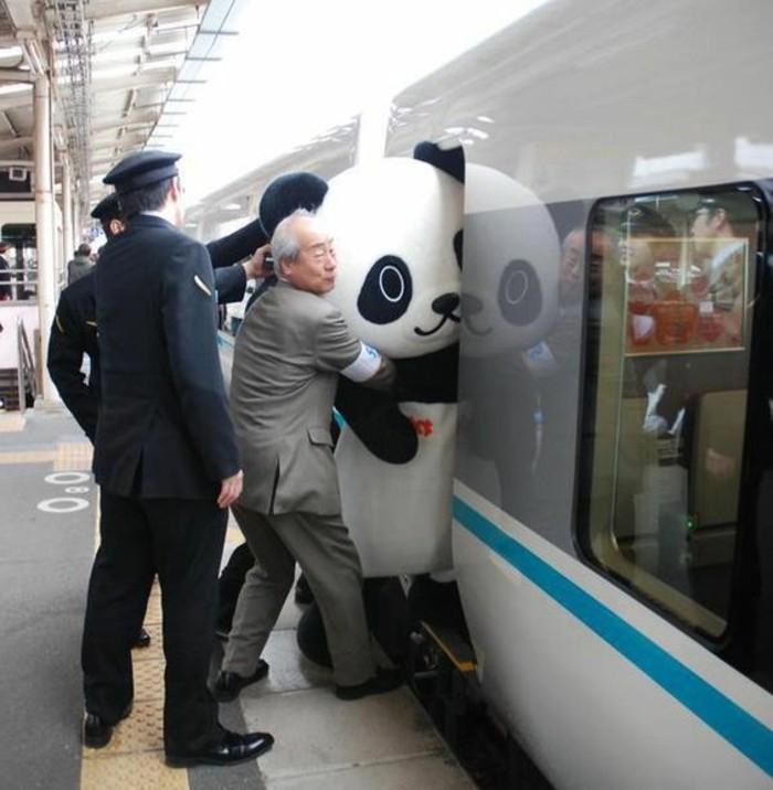 panda-roux-bebe-panda-belle-image-train