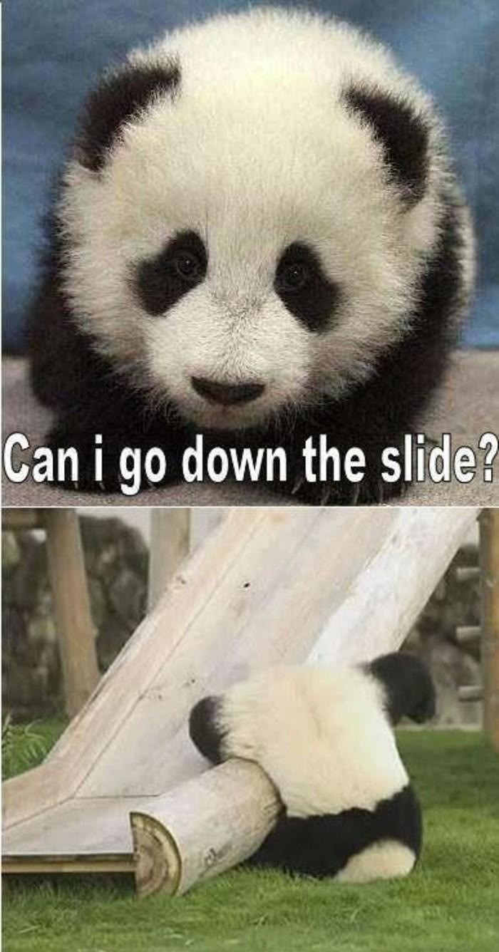 photo-panda-géant-bébé-mignon-image