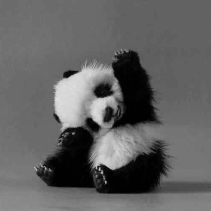 photo-panda-géant-bébé-mignon-image-hi