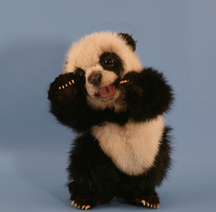 photo-panda-géant-bébé-mignon-image-photo