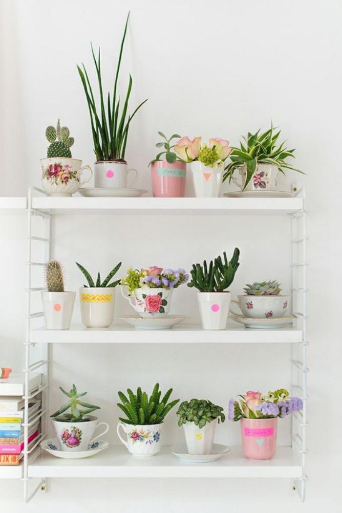 D corez avec les plantes grasses d 39 int rieur for Conseil sur les plantes