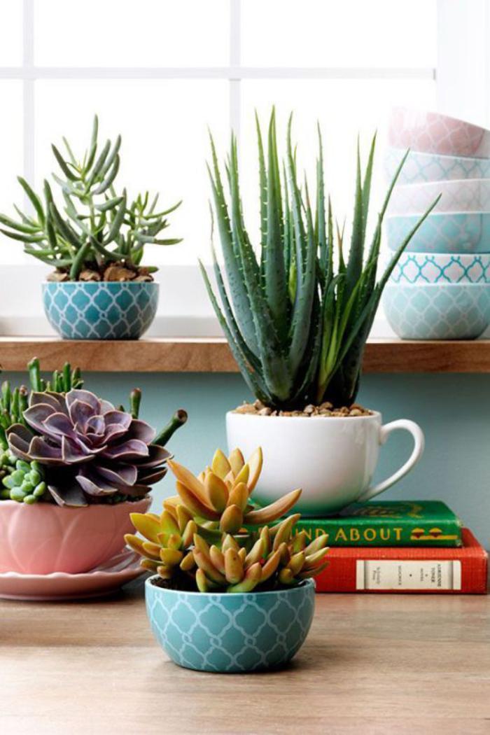 D corez avec les plantes grasses d 39 int rieur for Deco plante interieur