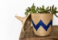 Décorez avec les plantes grasses d'intérieur