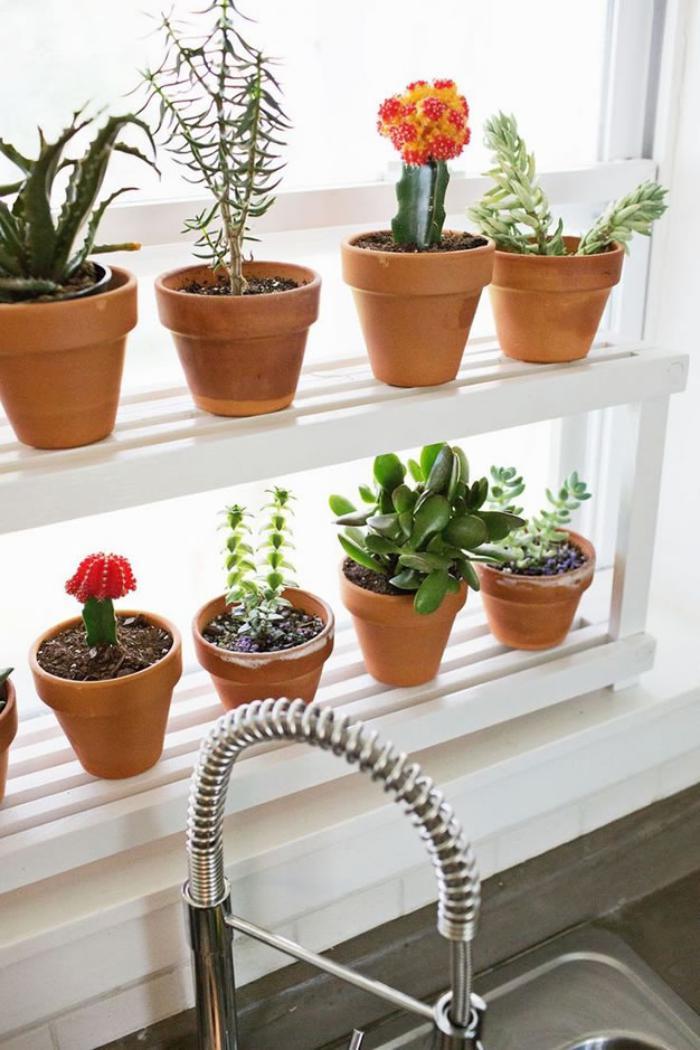D corez avec les plantes grasses d 39 int rieur for Plante cuisine decoration