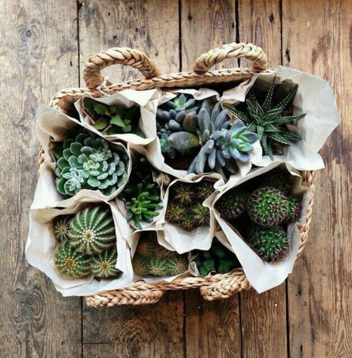 d corez avec les plantes grasses d 39 int rieur. Black Bedroom Furniture Sets. Home Design Ideas
