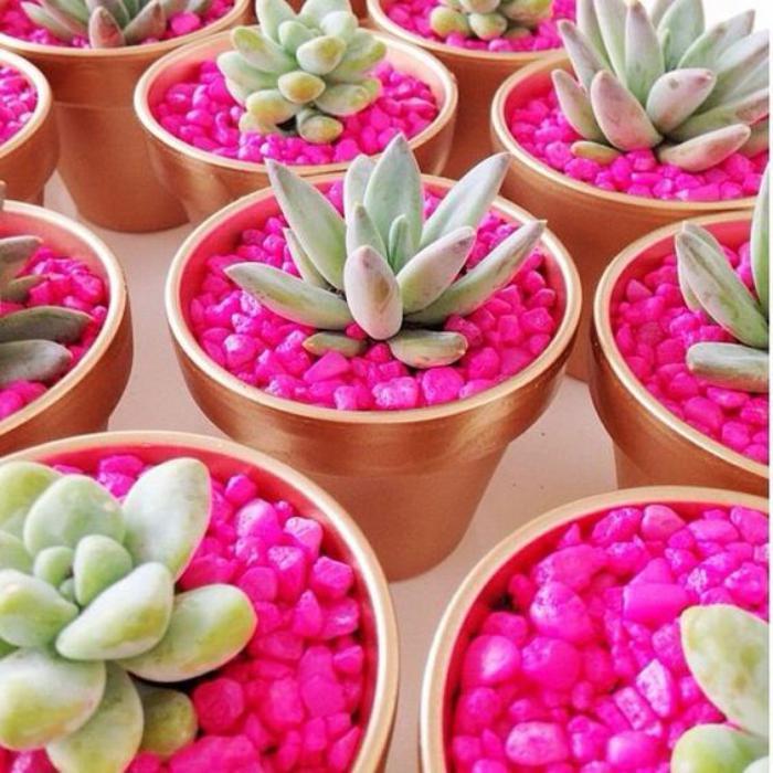 D corez avec les plantes grasses d 39 int rieur - Pot deco interieur ...