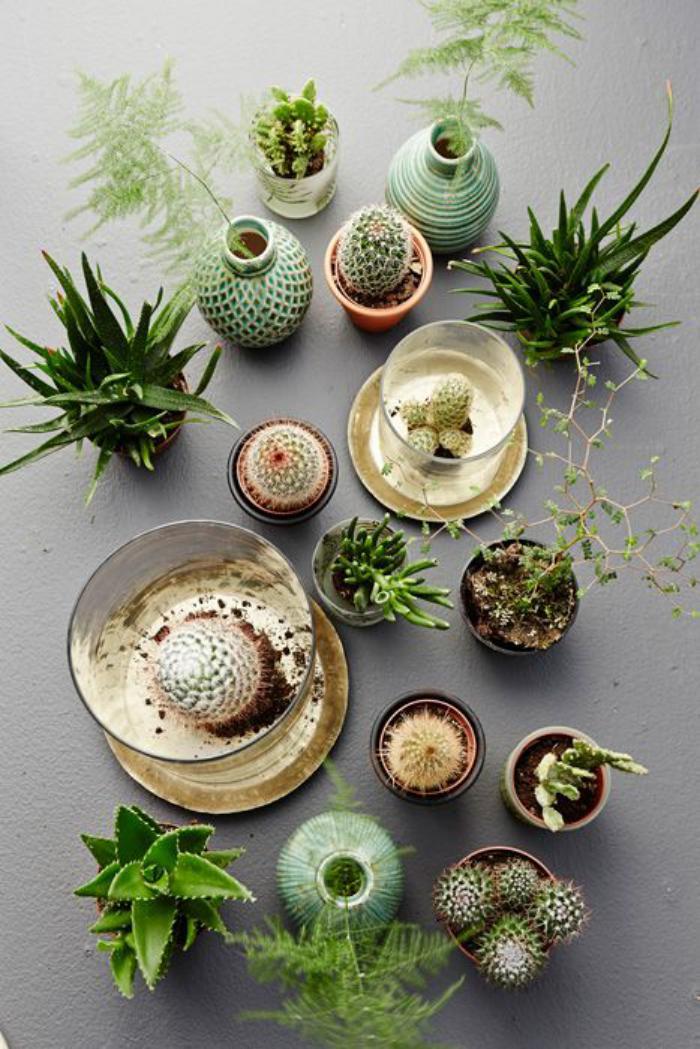 D corez avec les plantes grasses d 39 int rieur for Plantes d interieures