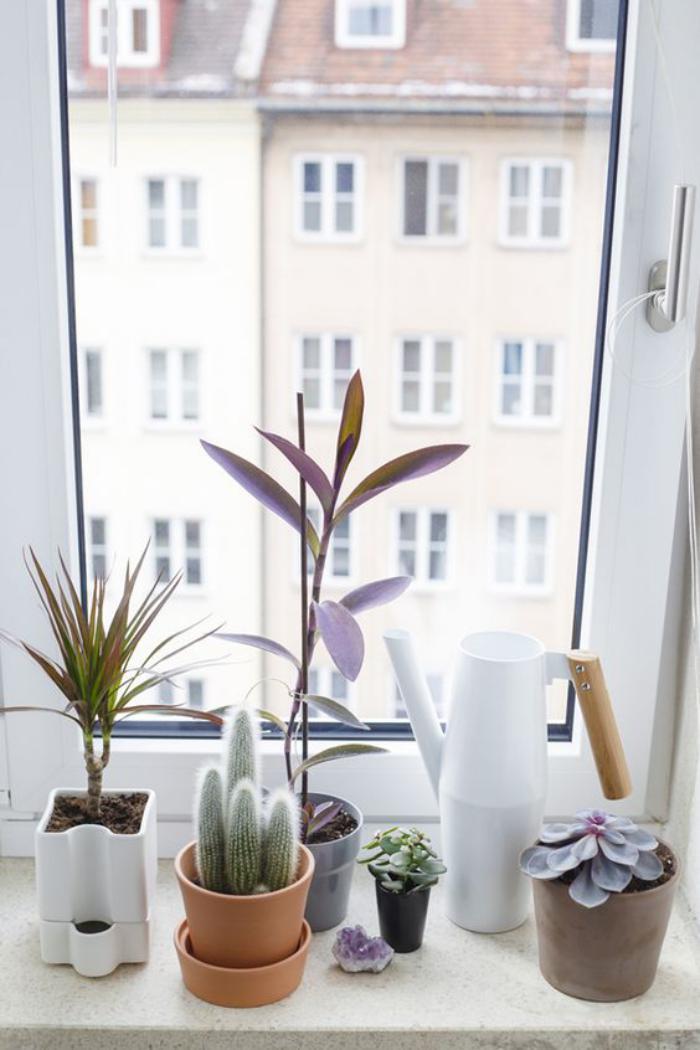D corez avec les plantes grasses d 39 int rieur for Survitrer une fenetre