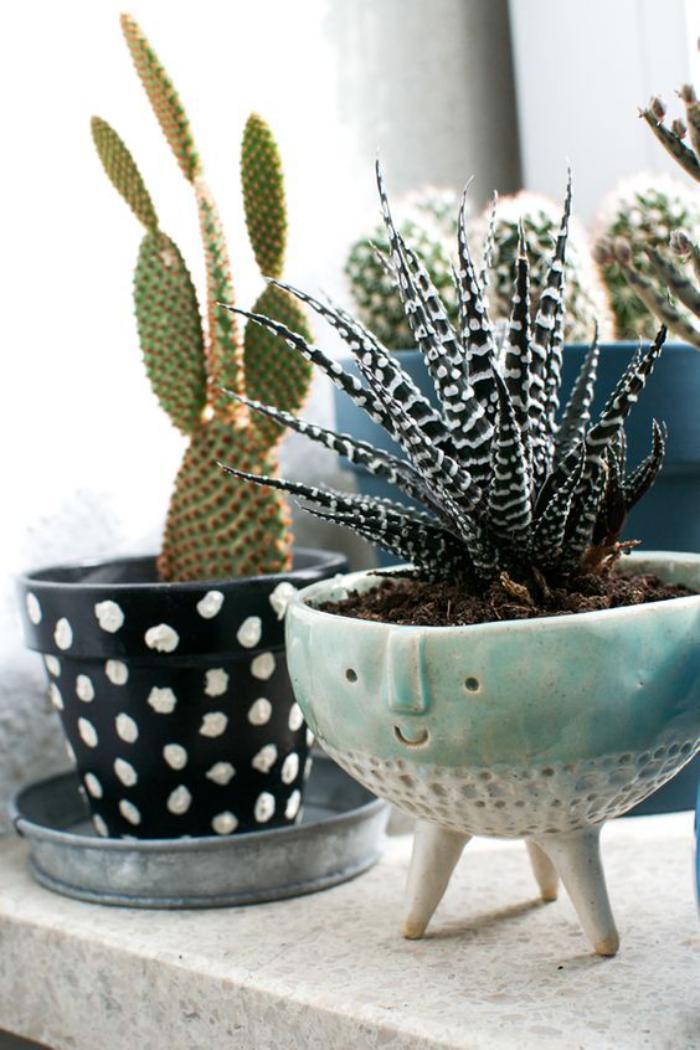 Plantes Grasses D Interieur