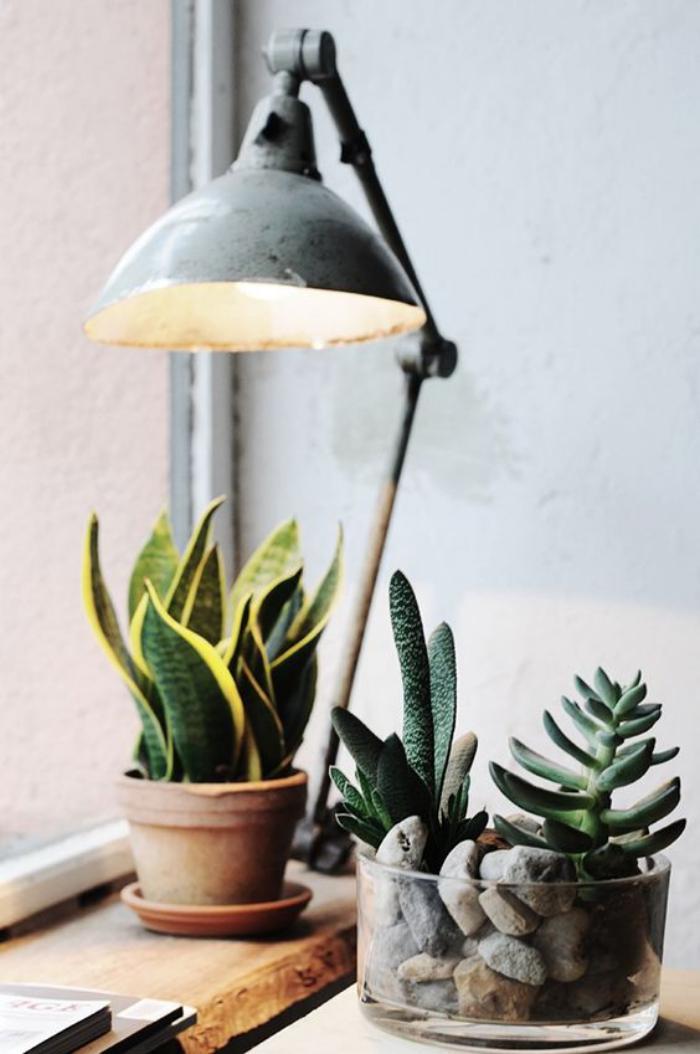D corez avec les plantes grasses d 39 int rieur for Lampe pour plante d interieur
