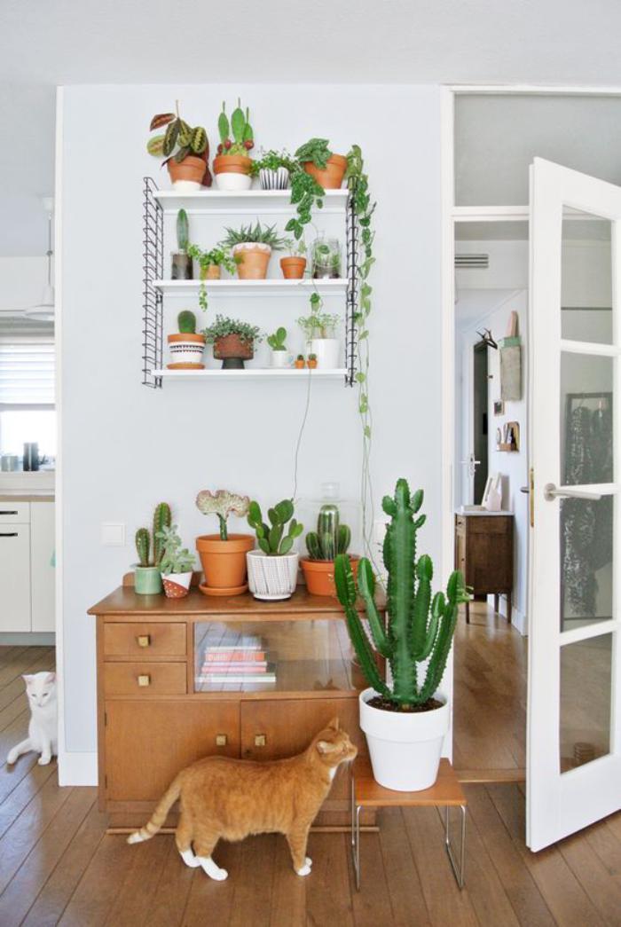 D corez avec les plantes grasses d 39 int rieur for Les plantes interieur