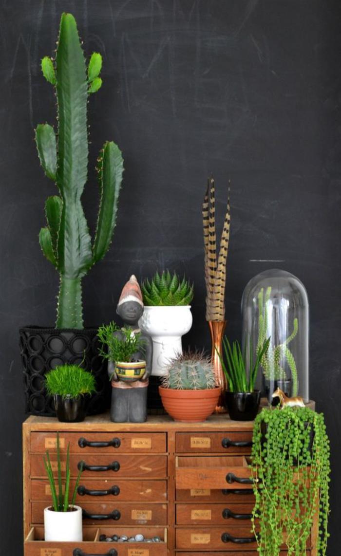Decorez Avec Les Plantes Grasses D Interieur Archzine Fr