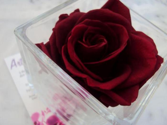 rose-stabilisée-dans-un-vase-en-verre