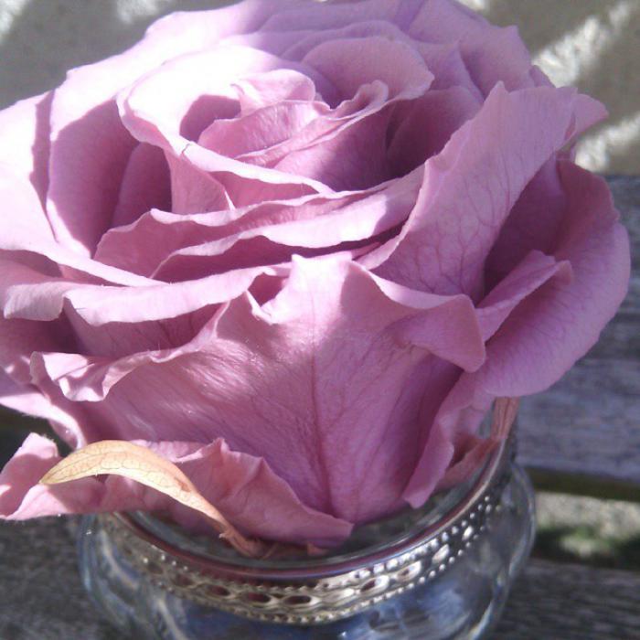 rose-stabilisée-jolie-rose-dans-un-mini-vase