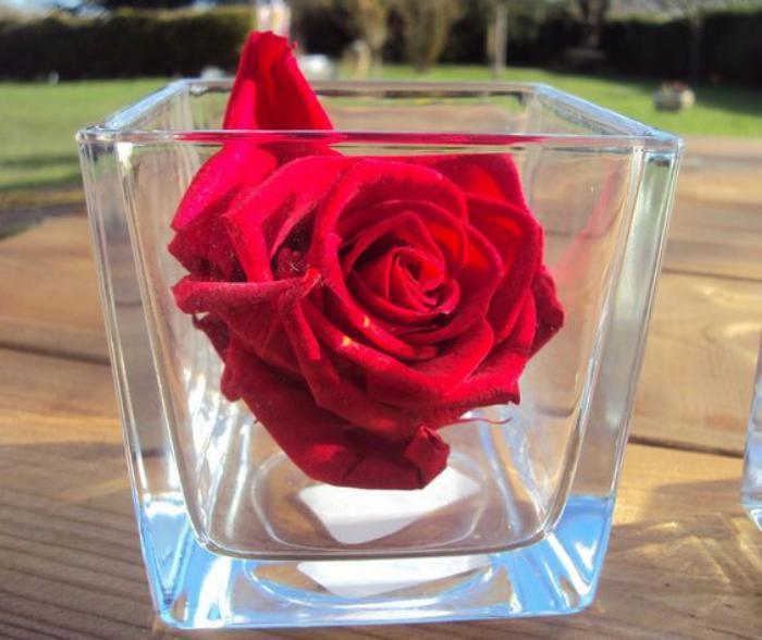 rose-stabilisée-rose-éternelle-rouge