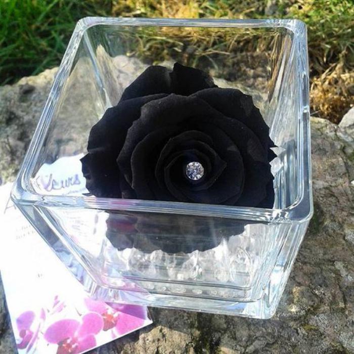 rose-stabilisée-rose-conservée-de-couleur-noire