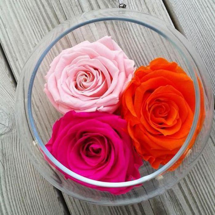 rose-stabilisée-roses-éternelles-en-trois-couleurs